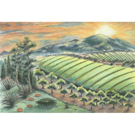 "Western Landscapes ""Harmony"""