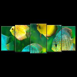 Beautiful Watch Tropical Fish - 5 panels XL