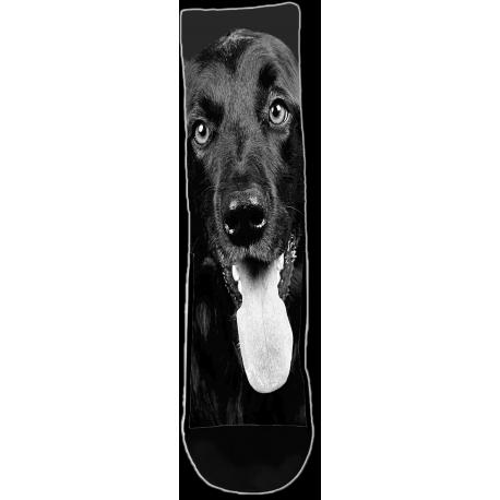 Dog - Black And White