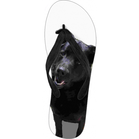 Flip Flops - Barley the Black Lab