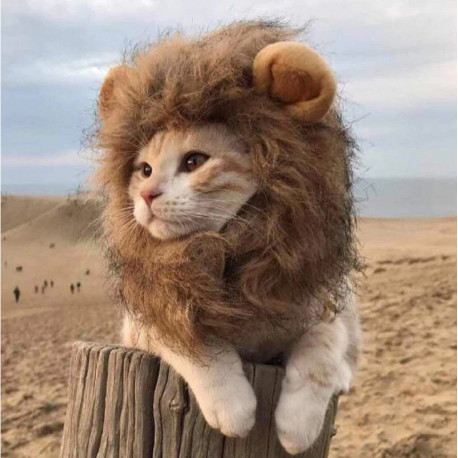 Lion Mane Halloween Costume for cats and dogs by Living Life with Style