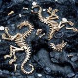 Medieval Themed Chess Sets  Dragons and Bones Closeup bones