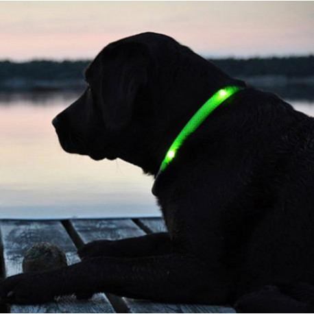 FREE Adjustable LED Dog Collar -Just Pay Shipping.  Green collar shown on Blu.